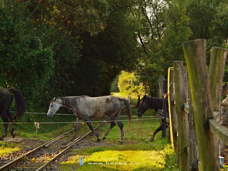 A lovak legelni indulnak fotó