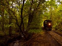 A Kemencei Erdei Múzeumvasút Pankaszi mozdonya Pityur-rétje és Strand-Godóvár között