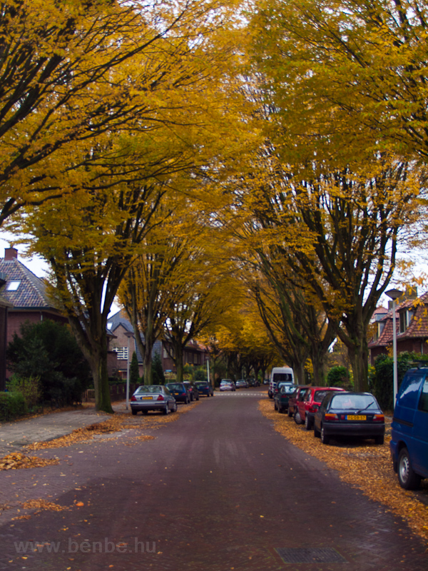 Street at Leiden with autumn colours photo