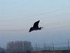 A bird at Leiden