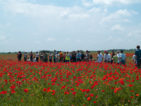Photographing on the field full of red poppies