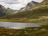 A Stadler Allegra trainset hauled St. Moritz - Tirano passenger train between Bernina Lagalb and Ospizio Bernina stations
