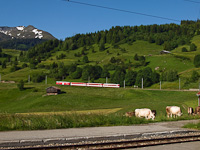 The Matterhorn-Gotthardbahn Deh 4/4<sup>I</sup> 21 seen between Mompé Tujetsch and Segnas