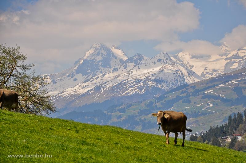 Valahol ezeken a legelőkön jár egy lila tehén is fotó