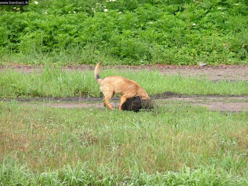 A kutyák játszanak fotó