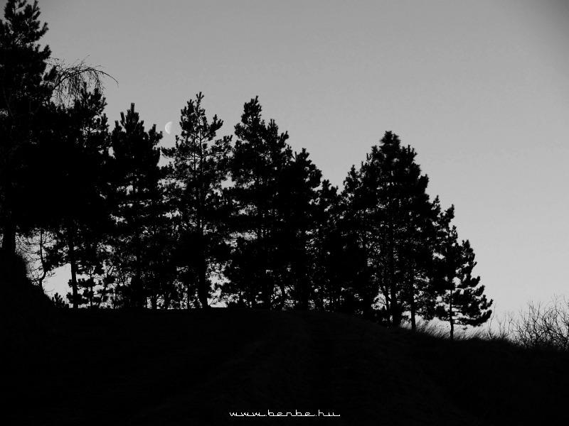 Fenyõk és a Hold Isaszegen fotó