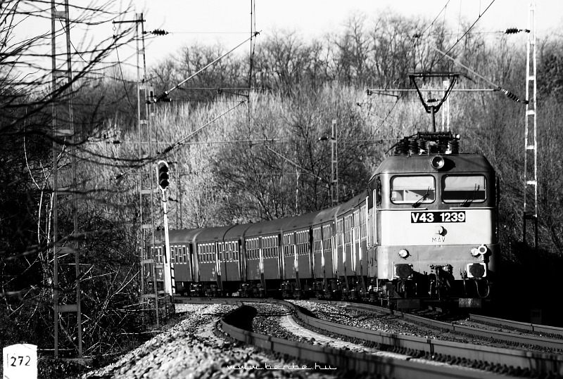 V43 1239 Isaszegnél fotó