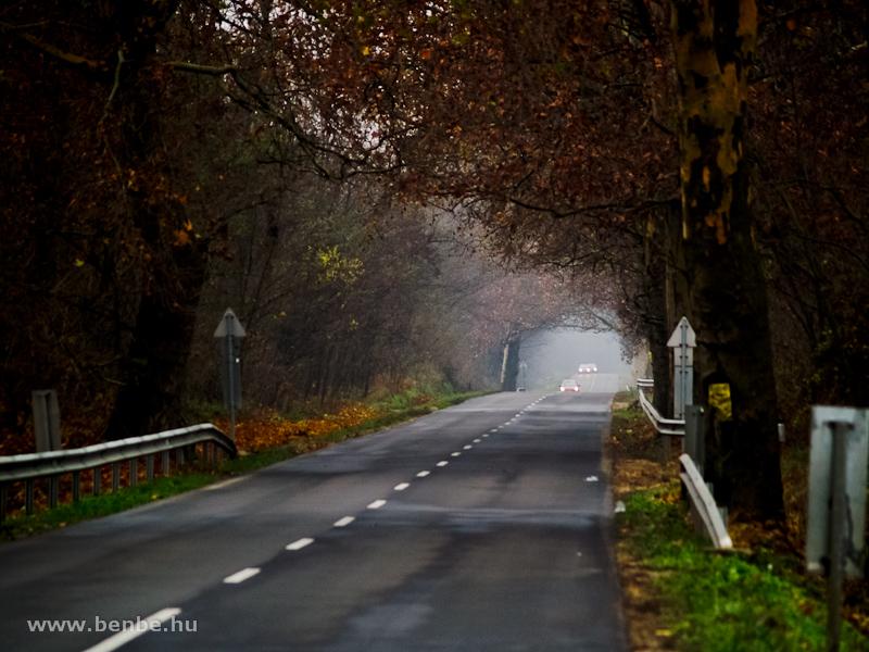 A Nagydobos és Ópályi közötti út lombalagútja fotó