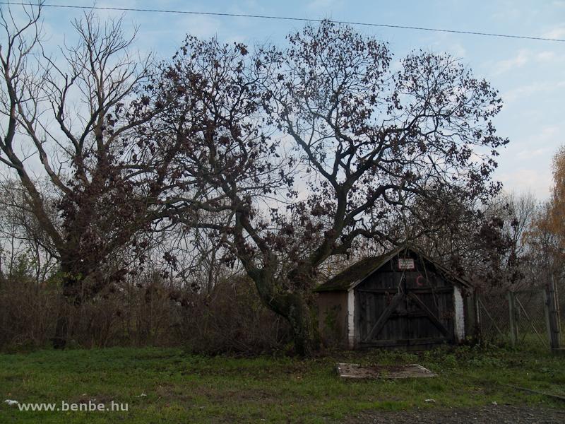 Egy fa árnyékába épített hajtányszín Fehérgyarmaton fotó
