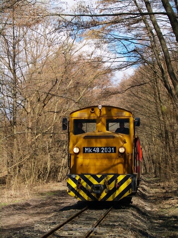 Mk48 2031 Királyréten az  Utolsó Színpompás Vonattal  az erdő mélyén fotó