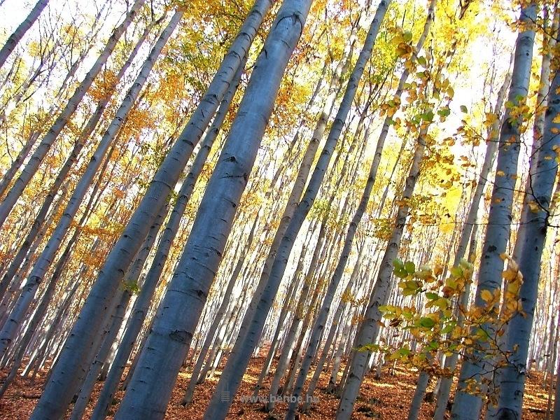 Álomerdő fotó