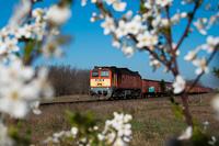 A MÁV-START 628 210 Székesfehérvár és Börgönd között, virágkeretben húzza tehervonatát egy szép, tavaszi napon