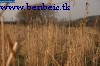 Dry grass near Tolmács