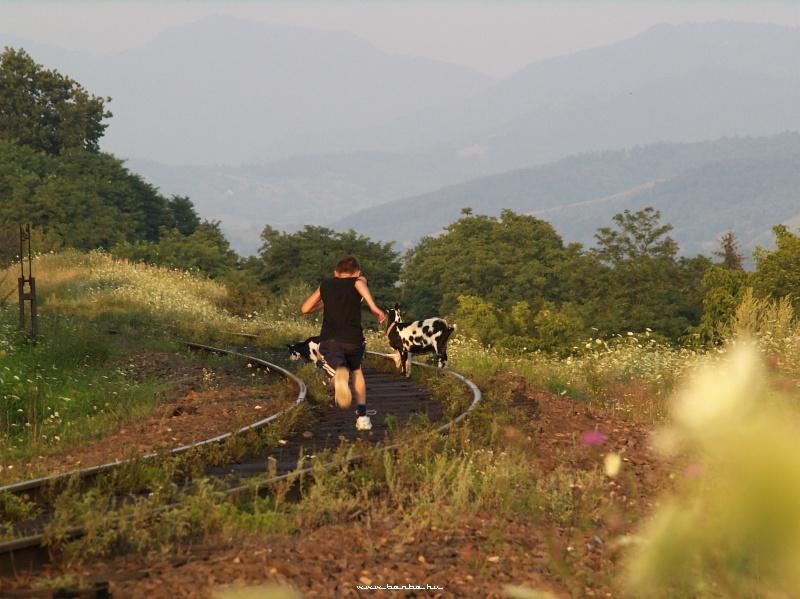 Aknaszlatina lenti részén a vágányokon kecskék legelésznek és a háttérben már nagy hegyek húzódnak fotó