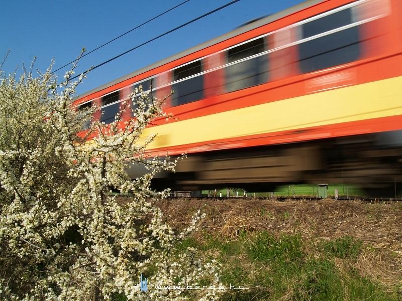 Bzmot a virágzó bokornál fotó