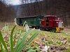 A Felsőtárkányi Erdei Vasút C-04 404 Stimecz-ház és Stimecz-ház kitérő között, előtérben egy hóvirággal