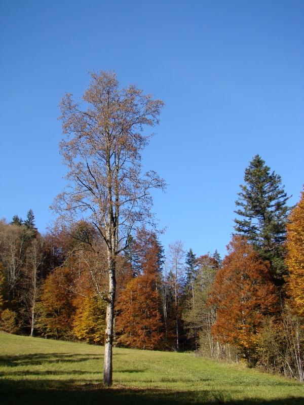 Táj a Wachtlbahn közelében fotó
